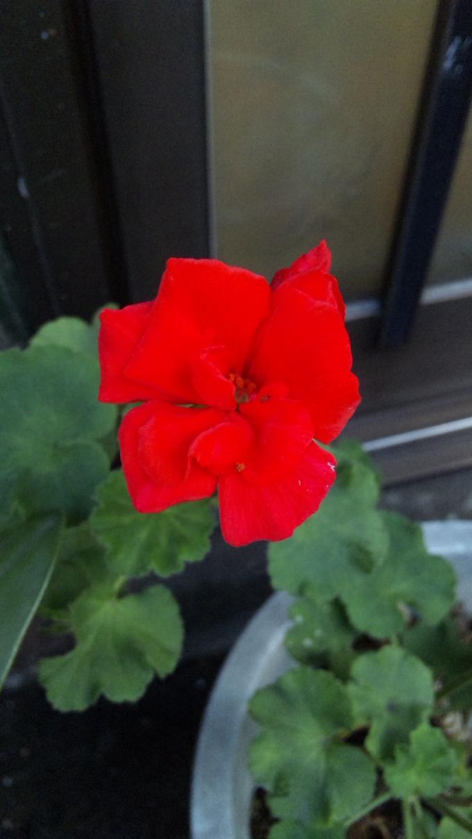 Flower_20111117