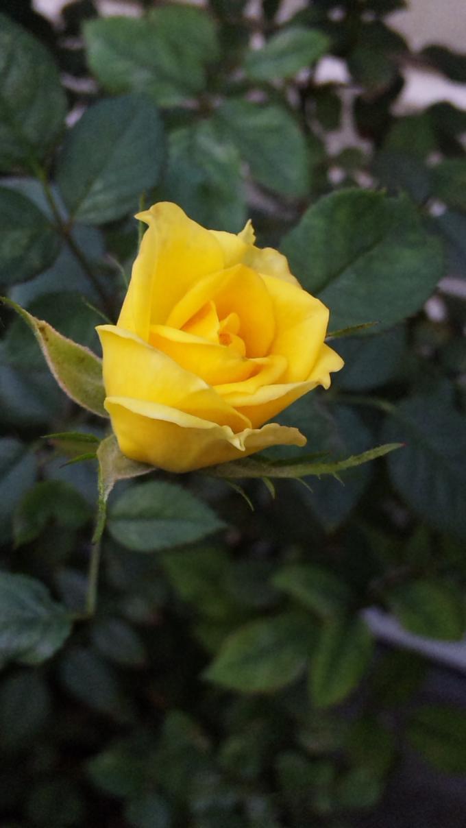 Flower_20111116