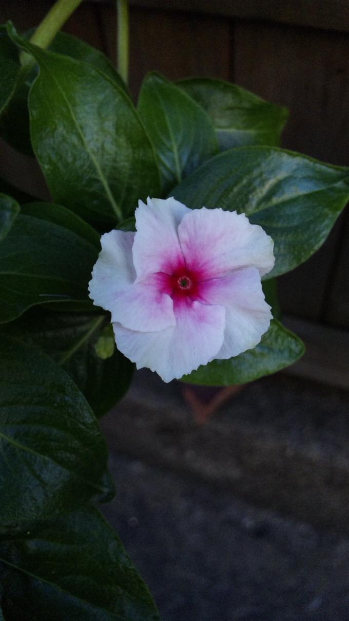 Flower+10_convert_20111031192922.jpg