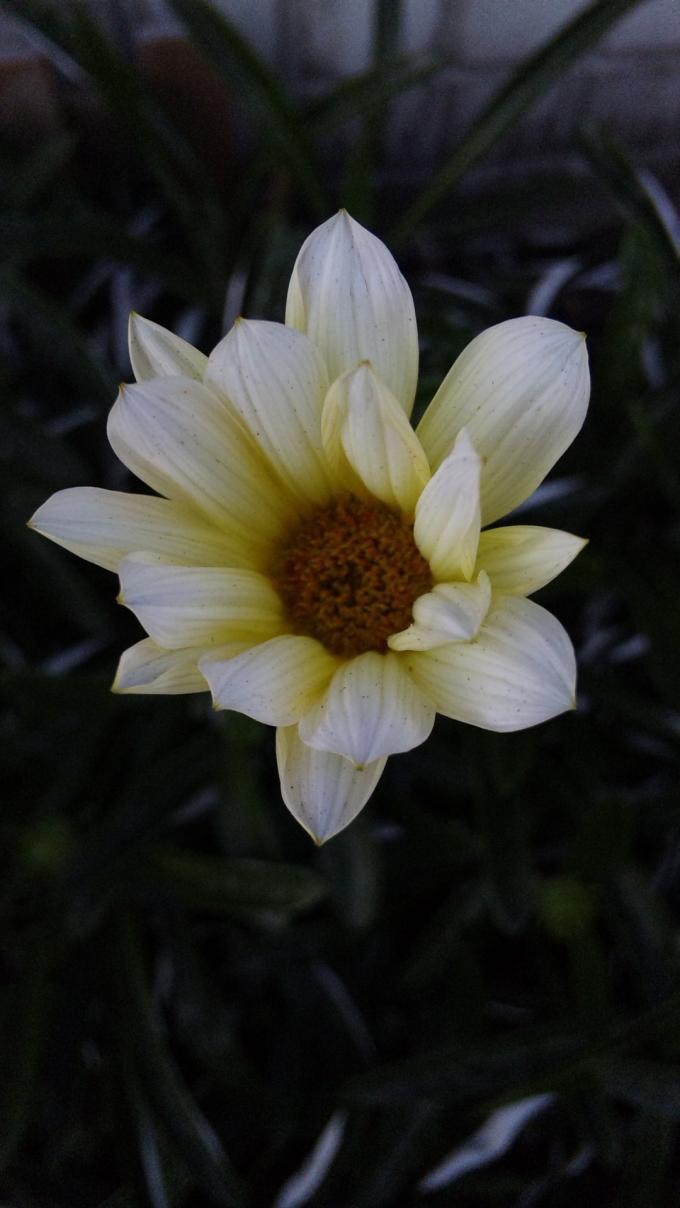 Flower+11_convert_20111104214826.jpg