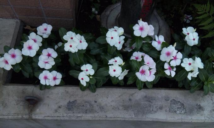 Flowers_20110706