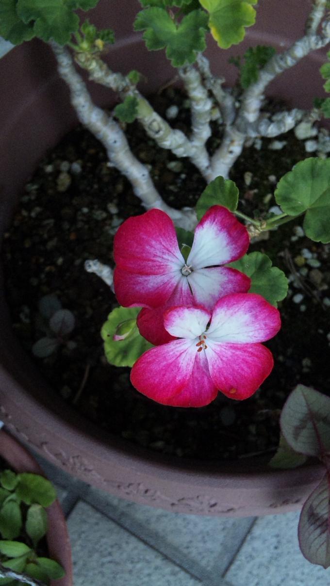 Flowers_20111029