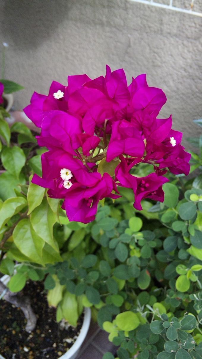Flowers_20111030