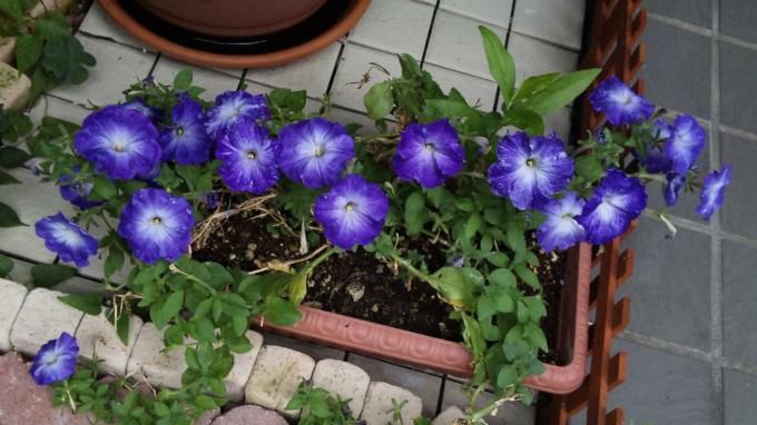 Flowers_20110727