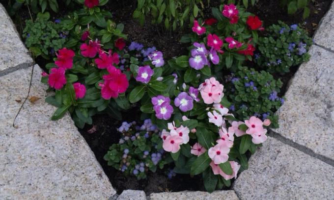 Flowers_20110704