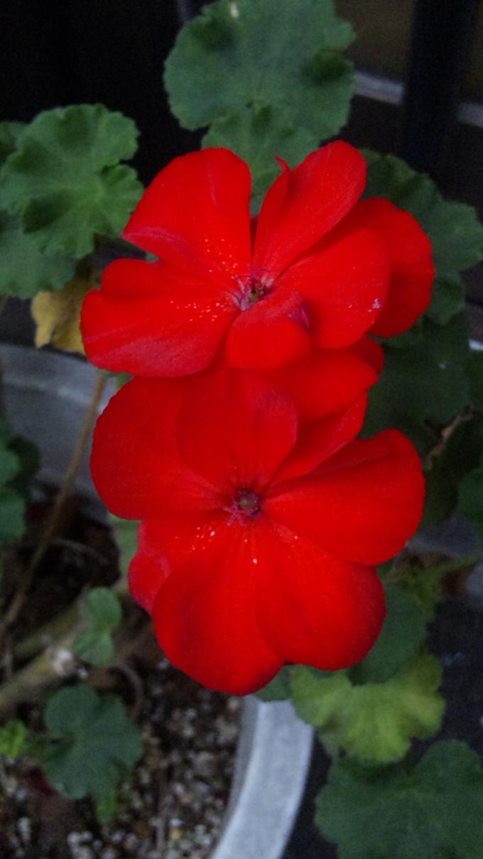 Flowers_20111102