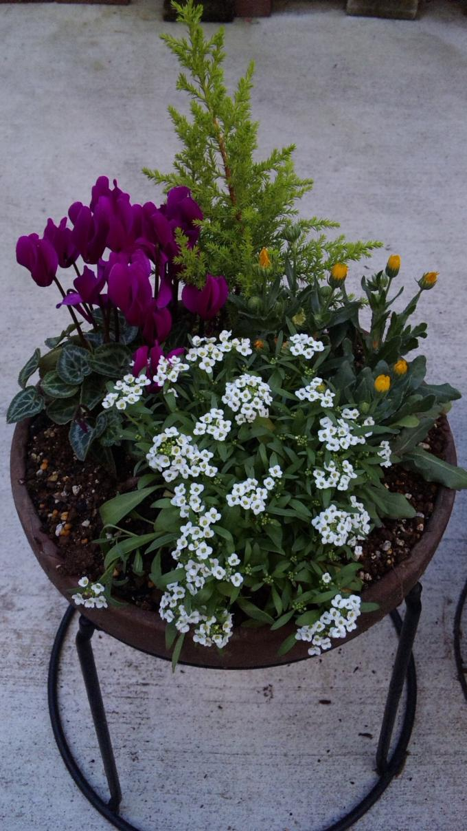 Flowers_20111118
