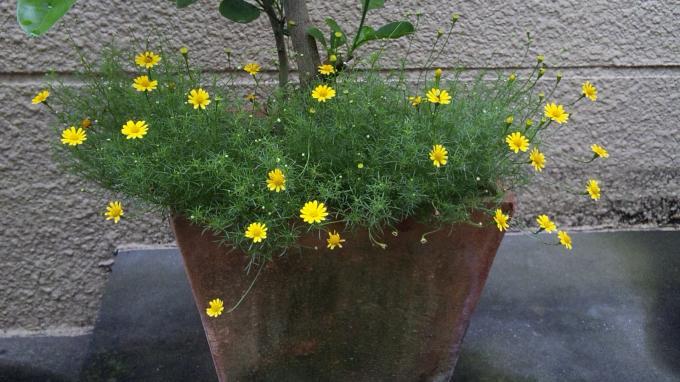 Flowers_20110728