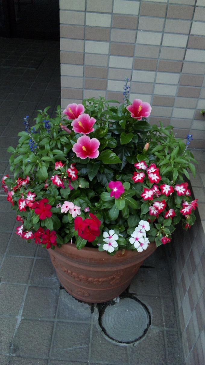 Flower_20110729