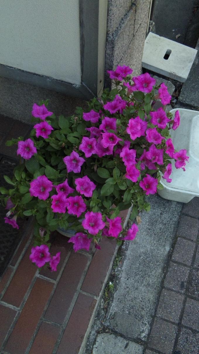 Flowers_20110711