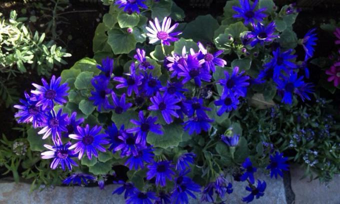 Flowers_20120106