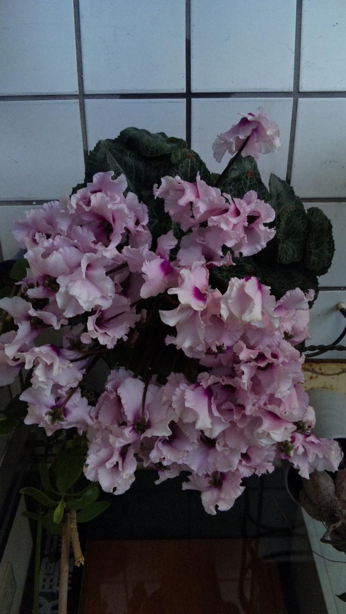 Flowers_20120104