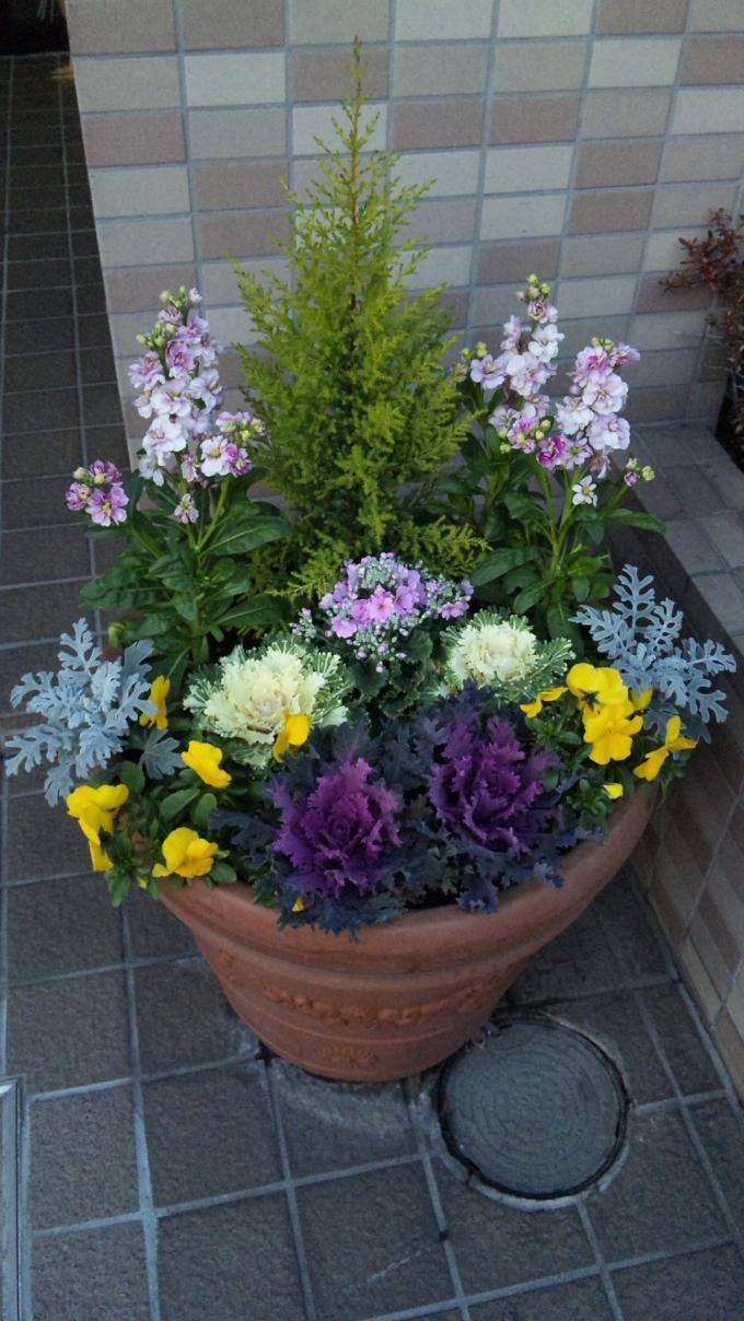 Flowers_20120107