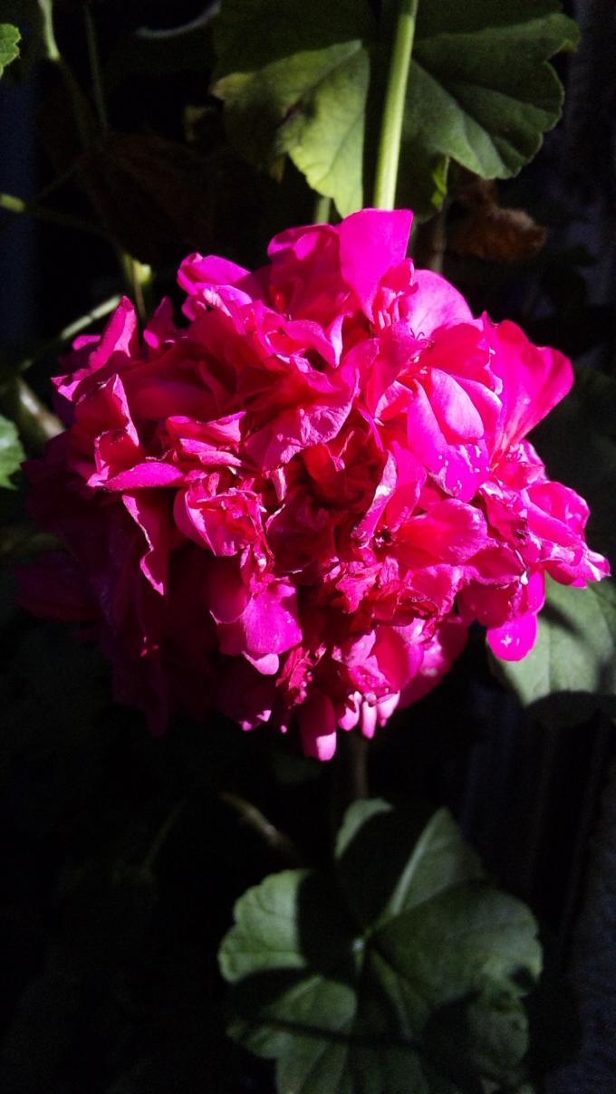 Flowers_20120110