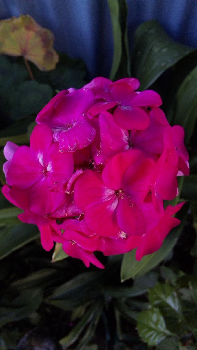 Flowers_20120111