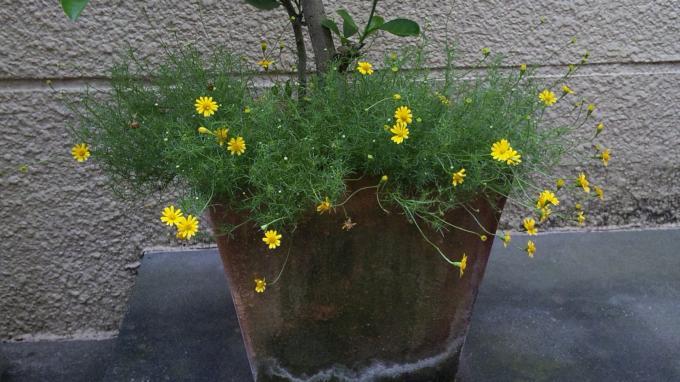 Flowers_20110730