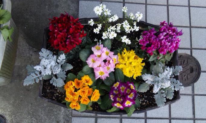 Flowers_20120108