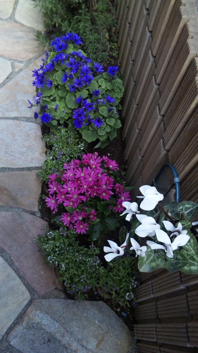 Flowers_20120112