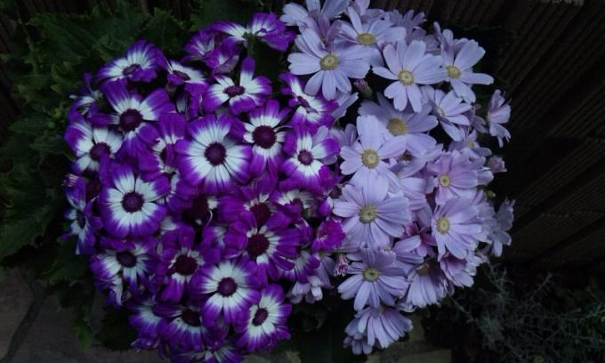 Flowers_20120118