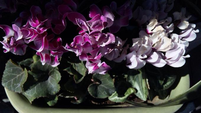 Flowers_20120113