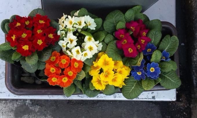 Flowers_20120114