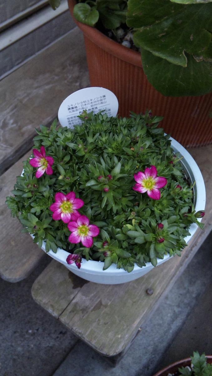 Flowers_20120117