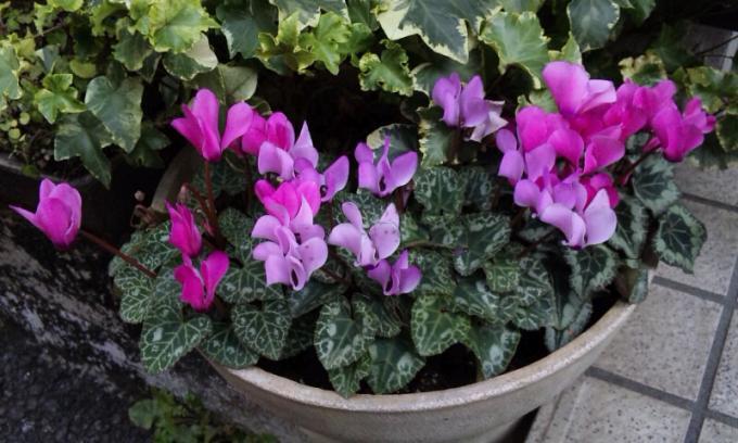 Flowers_20120115