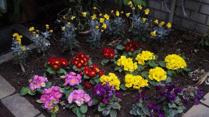 Flowers_20120116