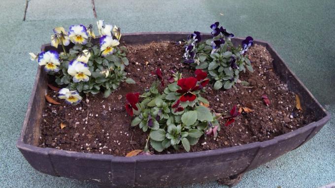 Flowers_20120119