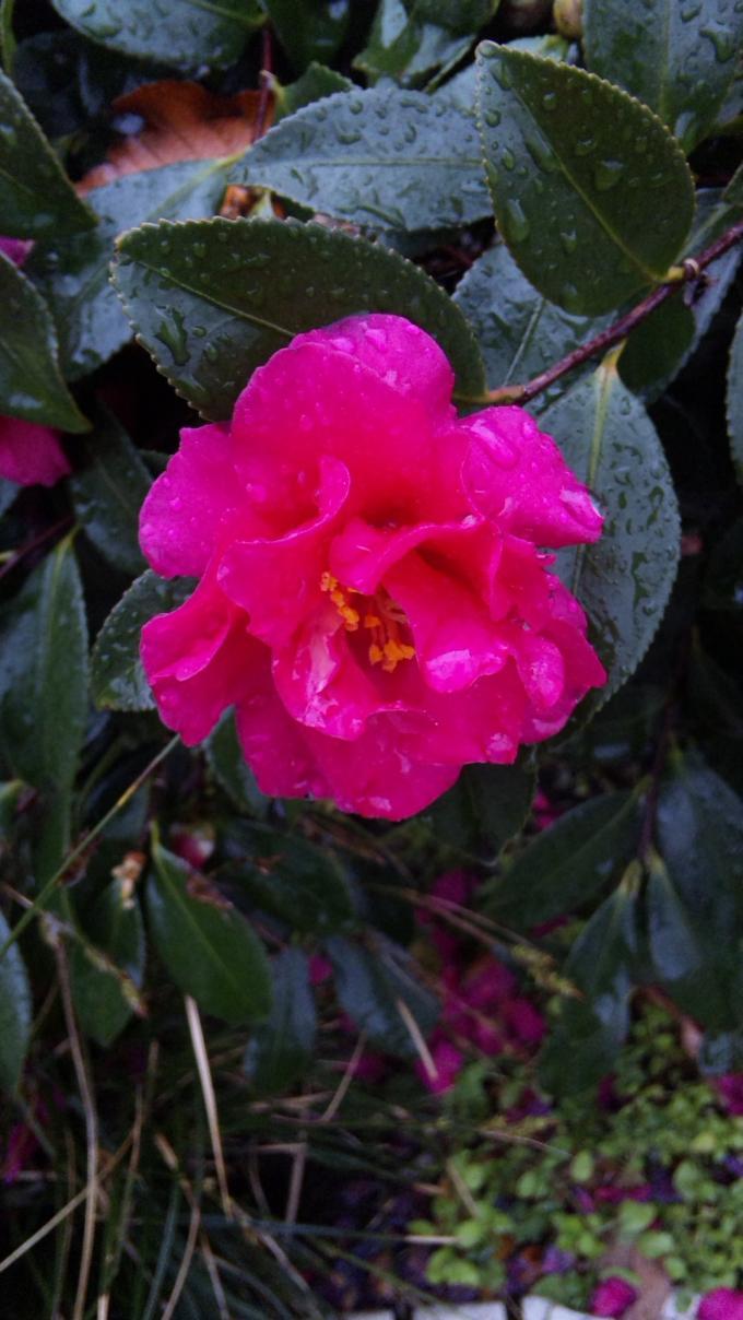 Flowers_20120122