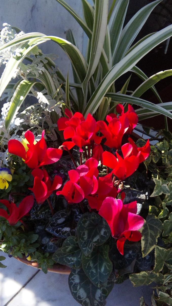 Flowers_20120211