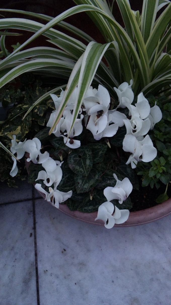 Flowers_20120123