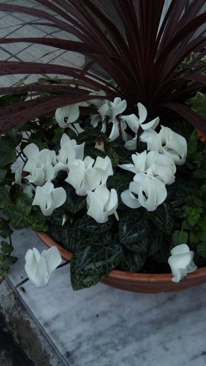 Flowers_20120125