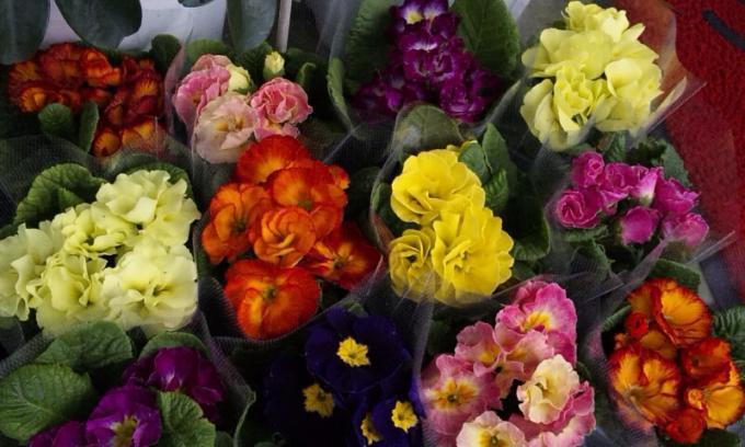 Flowers_20120124