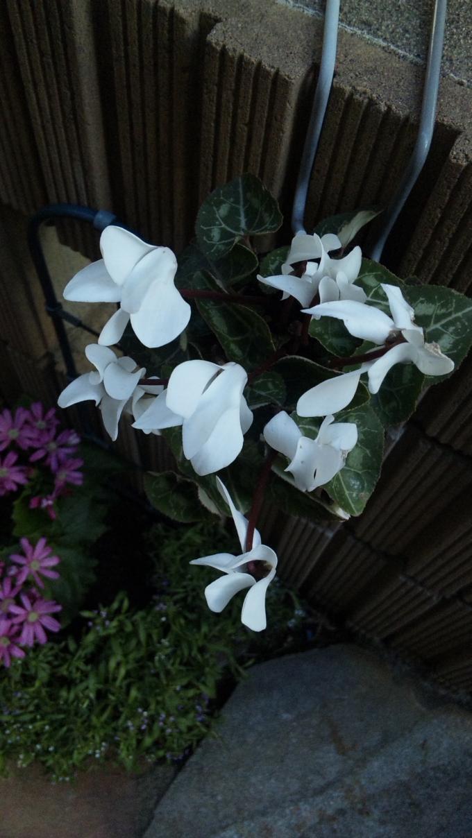 Flowers_20120127