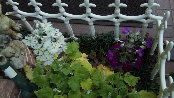 Flowers_20120131