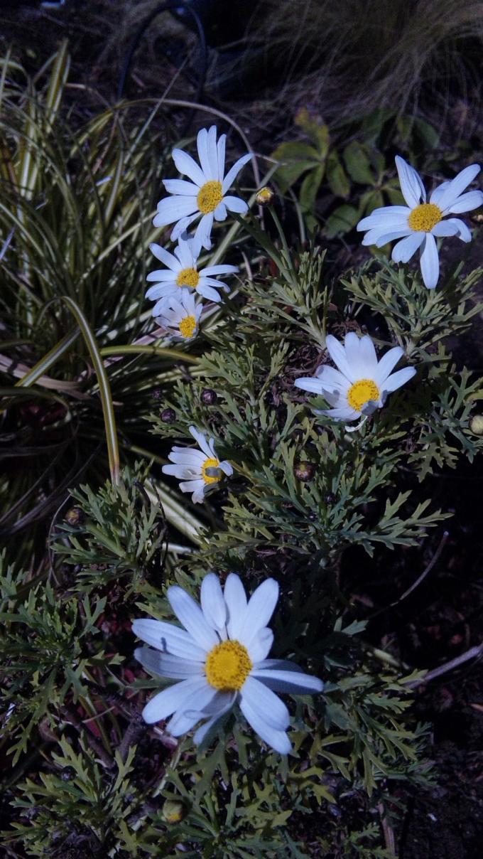Flowers_20120130