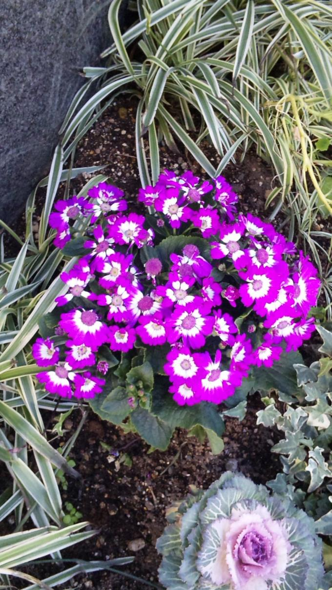 Flowers_20120201