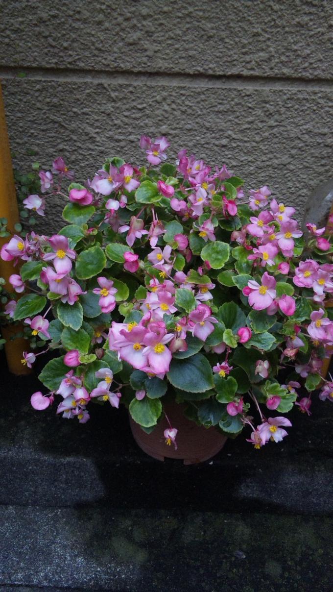 Flowers_20110801