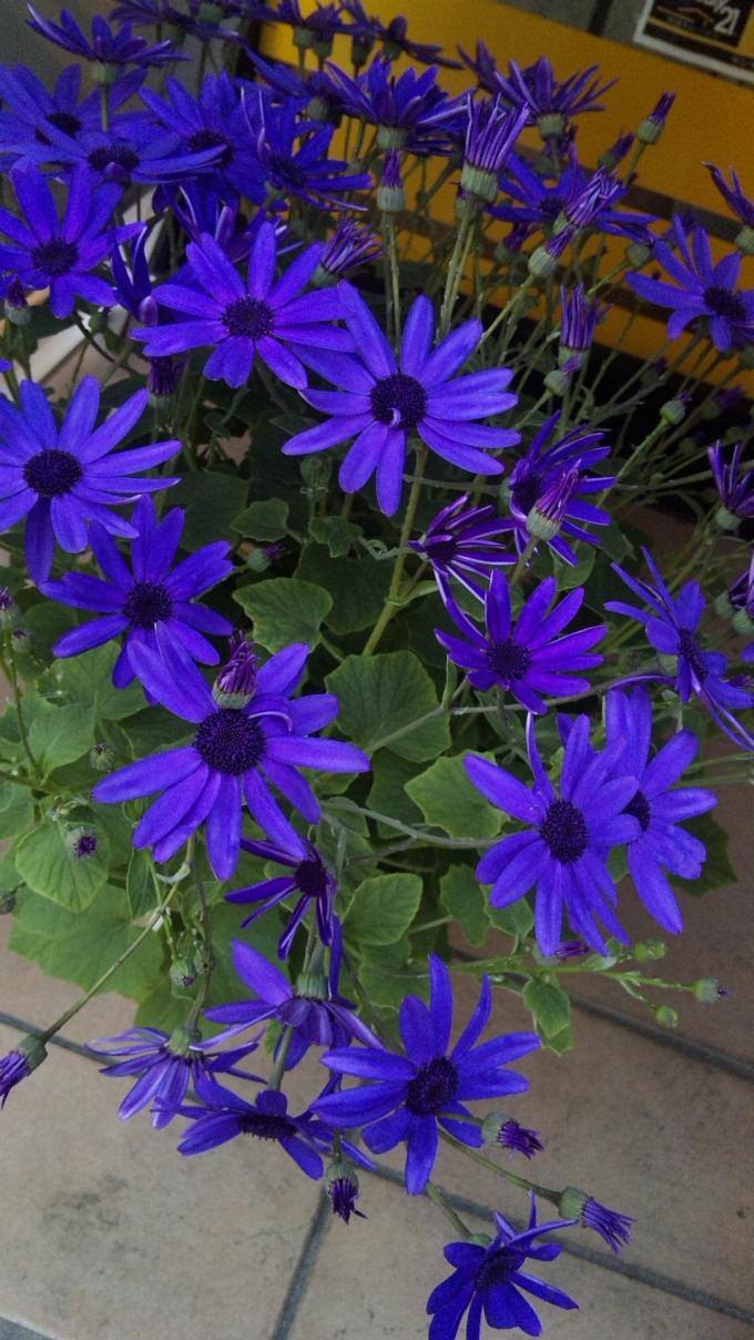 Flowers_20120212