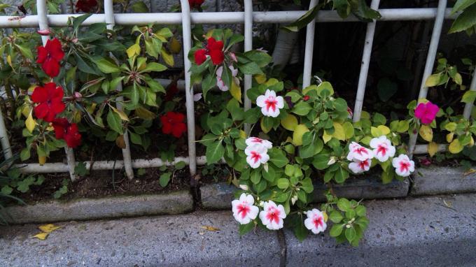 Flowers_20111103