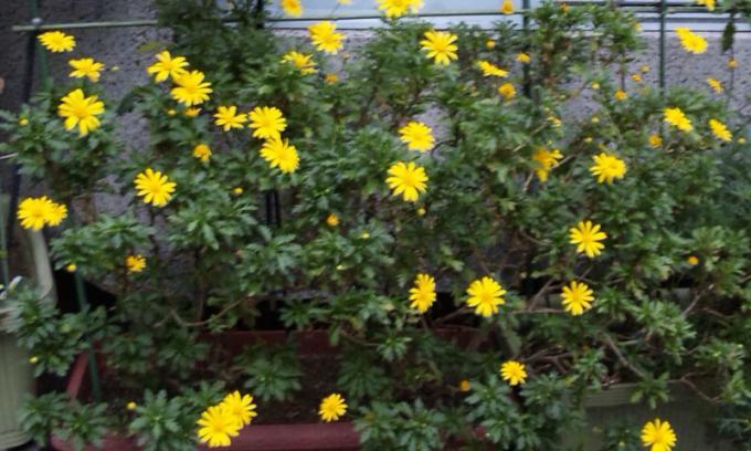 Flowers_20111110
