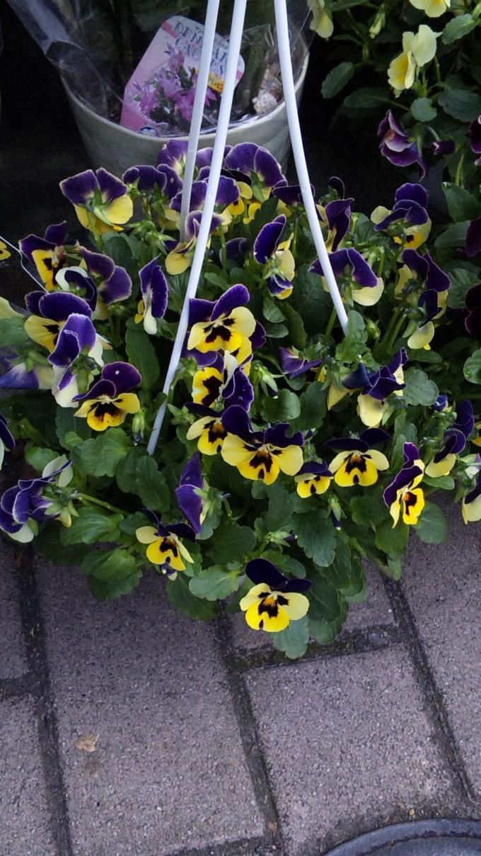 Flowers_20111114