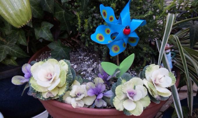 Flowers_20120203