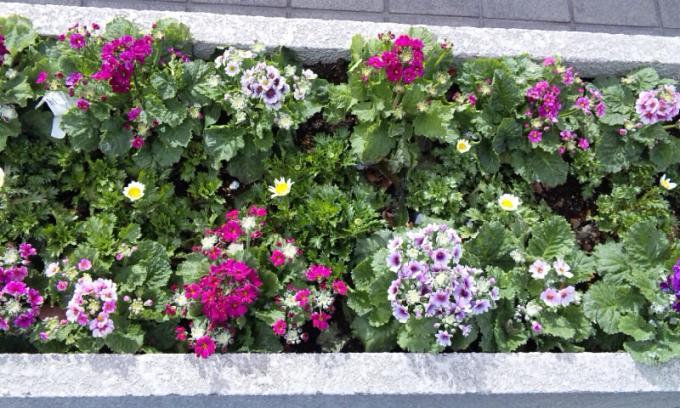 Flowers_20120202