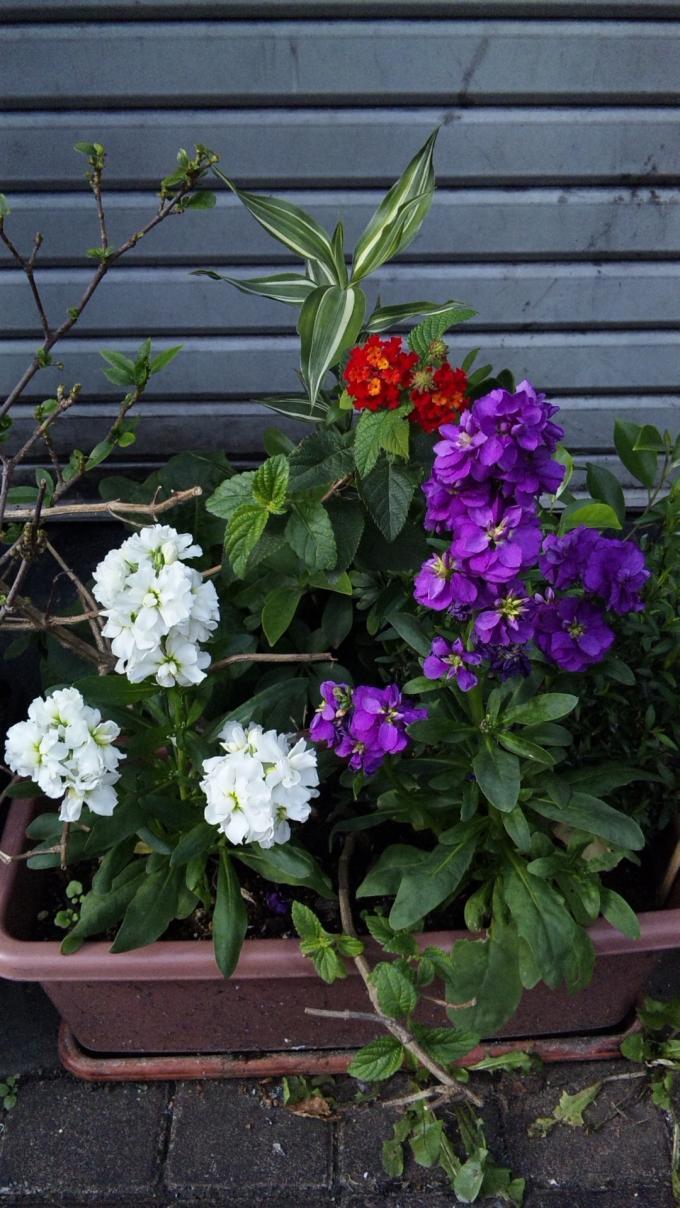Flowers_20111201