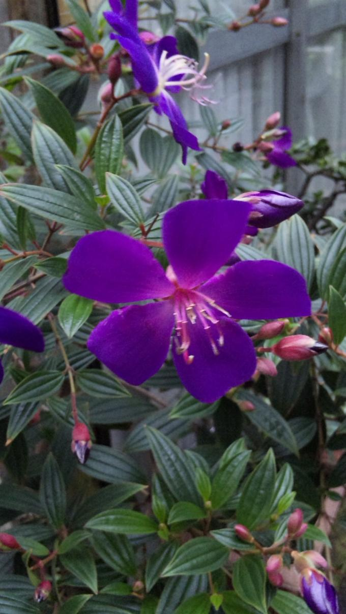 Flowers_20111202