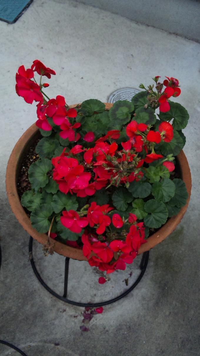 Flowers_20111203