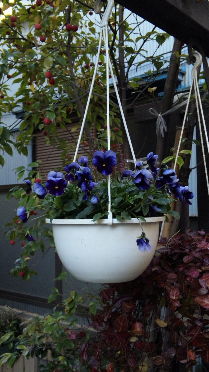 Flowers_20111205