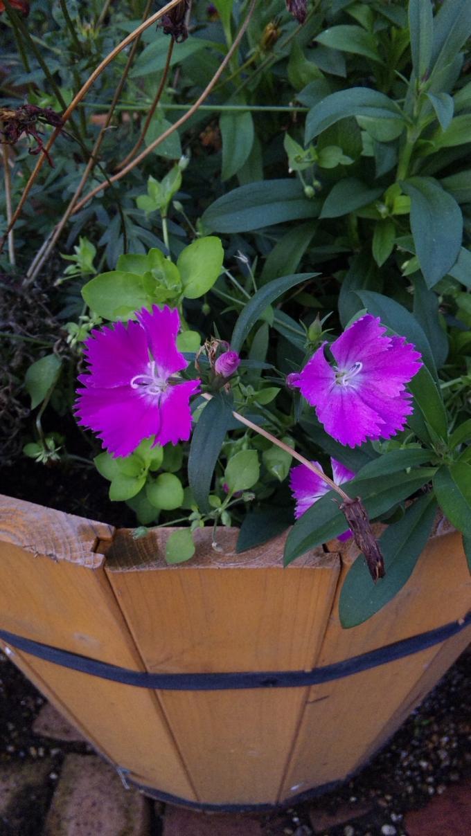 Flowers_20111217